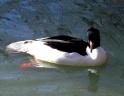 leman-riviere hiver2007-2008-27